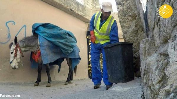 (ویدئو) استفاده شهرداری عقره از الاغ ها برای جمع آوری زباله