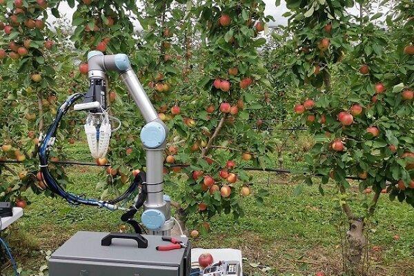 روباتی که با سرعت انسان میوه می چیند