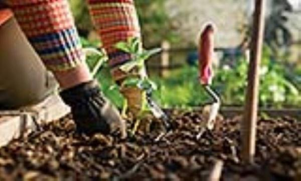 طراحی ویلا دوبلکس: با باغبانی سالم بمانید